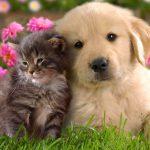 Fiori di Bach e animali: l'importanza dell'ascolto